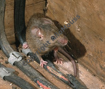 anti-souris efficace à Bruxelles par Allomouss désinfection