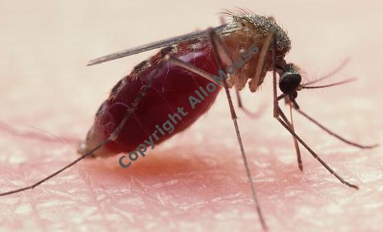 moustique entreprise de désinfection bruxelles